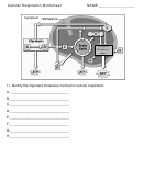 Cellular Respiration Worksheet Template